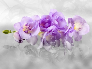 Fototapet Orhidee FTxxl 14400