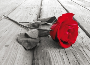 Fototapet Trandafir Rosu FTM 08190