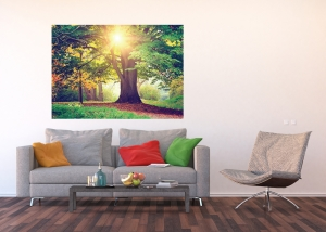 Fototapet Copacul Urias
