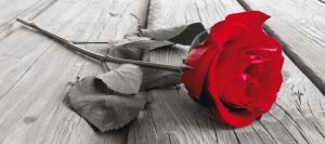Fototapet Trandafir Rosu FTG 09170