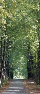 Fototapet Drum prin Padure