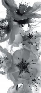 Fototapet Flori de Cires in Alb si Negru FTV 02210