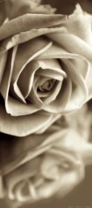 Fototapet Trandafir in Alb si Negru0