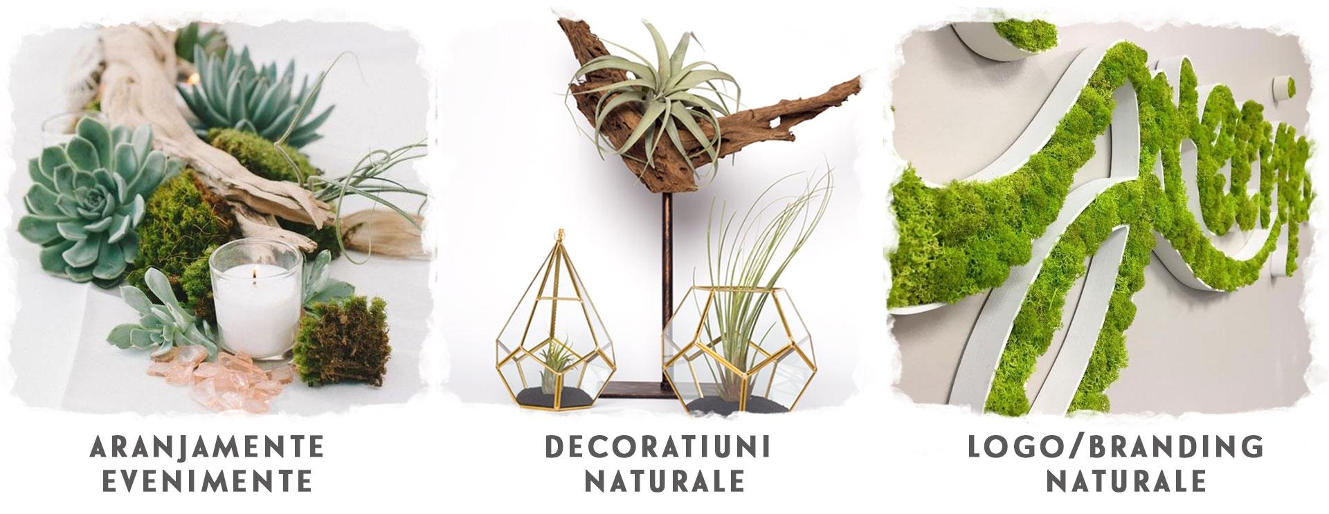 Logo verde vegetal evenimente aranjamente plante suculente