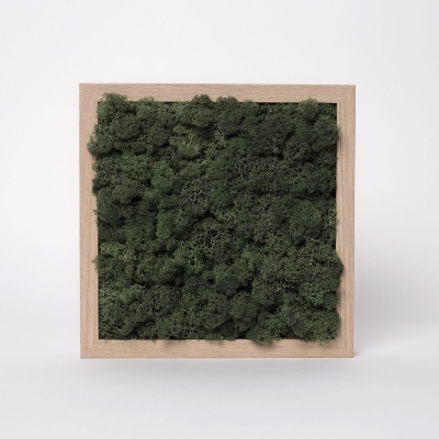 Rama Licheni 23 x 23 Verde Dark