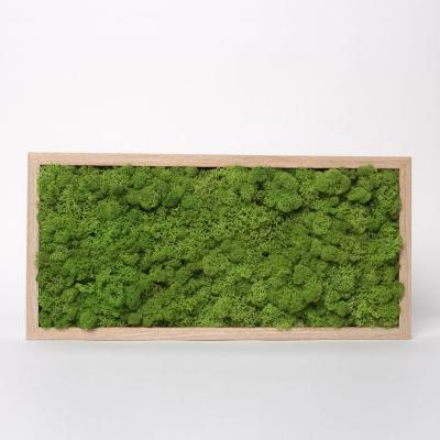 Tablou Licheni 23 x 50 Verde Forest1