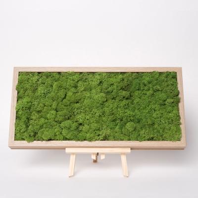 Tablou Licheni 23 x 50 Verde Forest2