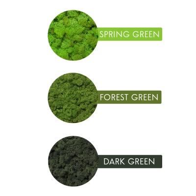 Tablou Licheni 23 x 50 Verde Forest5
