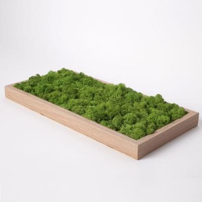Tablou Licheni 23 x 50 Verde Forest3
